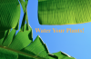 Water_Your_Plants.png