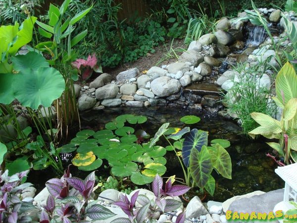 What size pond do you need for fish aquarium forum for Garden pond do you need a pump