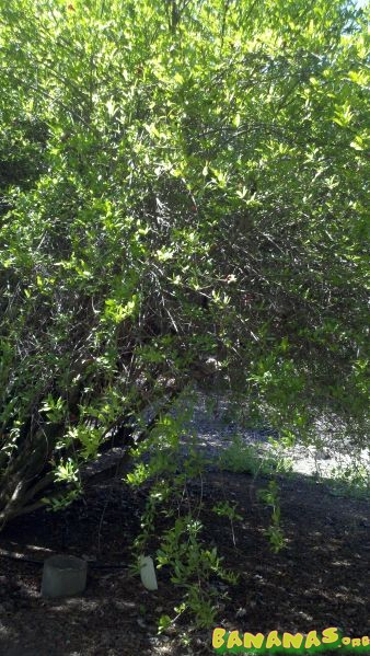 Uc Riverside Botanic Gardens Subtropical Fruit Orchard