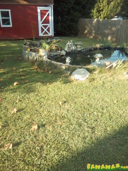 Everything 39 s ready for winter for Pond plants that survive winter